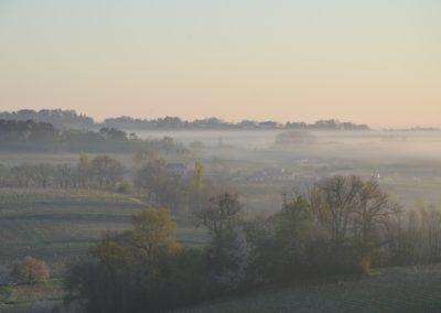 Le vignoble sous la brume