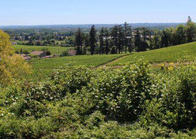 Le vignoble de Fronsac