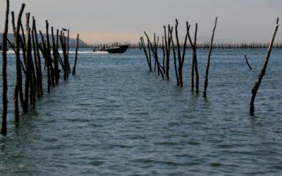 À la découverte d'un métier : ostréiculteur au Bassin d'Arcachon